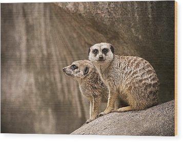 The Rock Of Meerkats Wood Print by Chad Davis