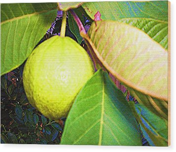The Rose Apple Wood Print by Winsome Gunning