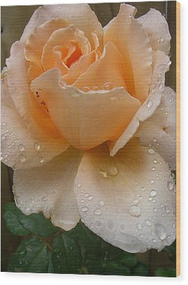 The Rose Wood Print by Kimberly Morin