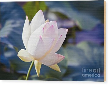 The Sacred Lotus Wood Print by Sharon Mau