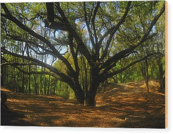 The Sacred Oak Wood Print
