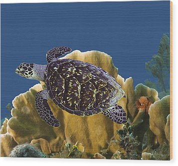 Wood Print featuring the photograph The Sea Turtle by Paula Porterfield-Izzo