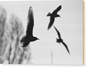 The Seagull Flying  Wood Print
