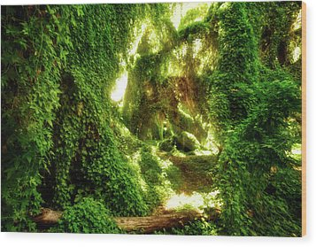 Wood Print featuring the photograph The Secret Garden, Perth by Dave Catley