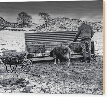 Wood Print featuring the photograph The Shepherd by Keith Elliott