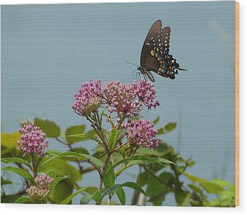 Wood Print featuring the photograph The Spicebush Swallowtail Of Prettyboy Reservoir by Donald C Morgan