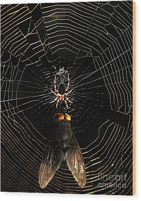 The Spider  And The Fly Wood Print by Wingsdomain Art and Photography