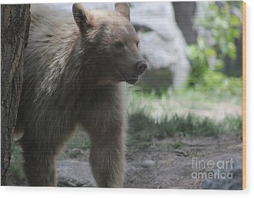 The Spirit Bear Wood Print by Wilko Van de Kamp