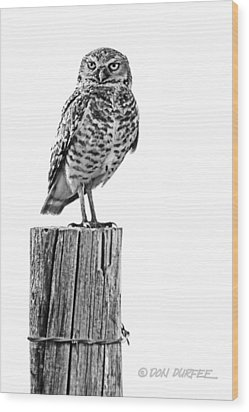 Wood Print featuring the photograph The Stare by Don Durfee