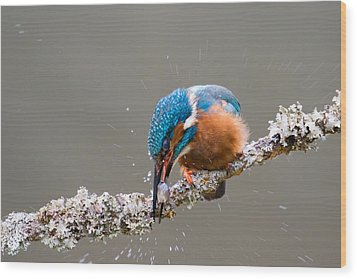 Wood Print featuring the photograph The Stunning Common Kingfisher by Phil Stone