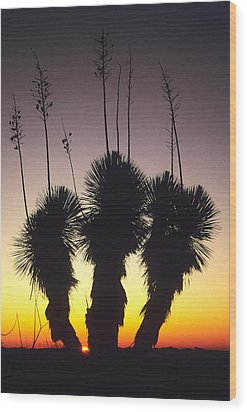 The Sun Sets Behind A Stand Of Yucca Wood Print by Bill Hatcher
