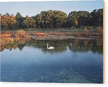 The Swan Of Cross Village Marsh Wood Print