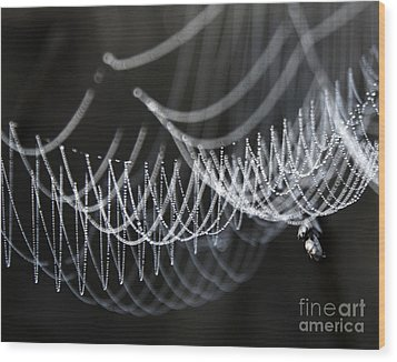 Wood Print featuring the photograph The Tangled Webs We Weave by Jan Piller