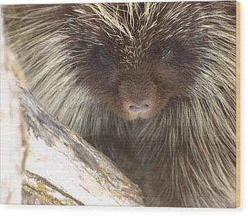 Wood Print featuring the photograph The Tender Side Of Porcupine by DeeLon Merritt