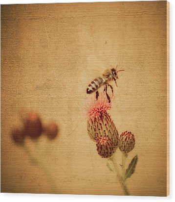 The Thistle And The Bee Wood Print