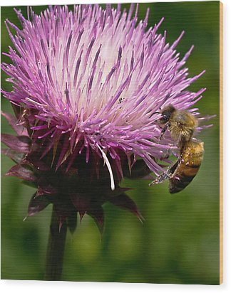 The Thistle And The Stinger Wood Print by Ron Plasencia