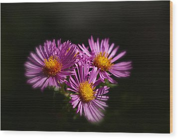 Wood Print featuring the photograph The Three Daisies by Anthony Rego