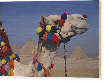 The Three Great Pyramids Of Giza Wood Print by Stephen St. John
