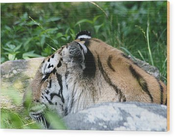Wood Print featuring the photograph The Tiger  by Paul SEQUENCE Ferguson             sequence dot net