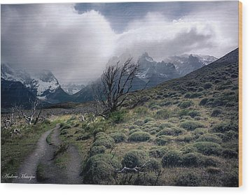 The Tree In The Wind Wood Print by Andrew Matwijec