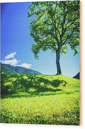 Wood Print featuring the photograph The Tree On The Hill by Silvia Ganora