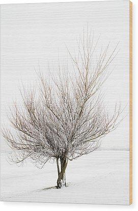 The Tree Wood Print by Svetlana Sewell