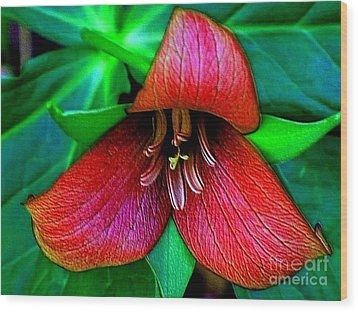 Wood Print featuring the photograph The Trillium by Elfriede Fulda