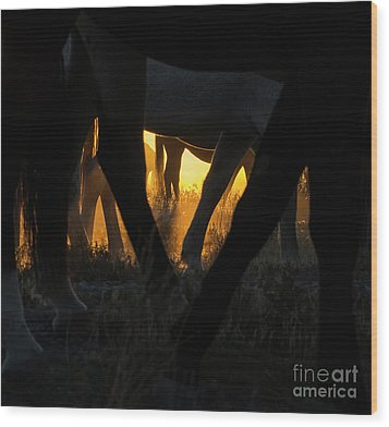 The Wandering Few Wood Print by Nicole Markmann Nelson