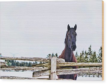 Wood Print featuring the photograph The Watcher 2 by Traci Cottingham