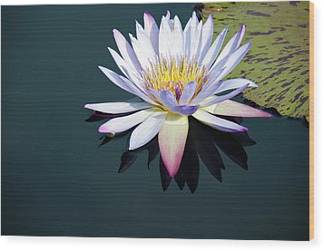 The Water Lily Wood Print by David Sutton
