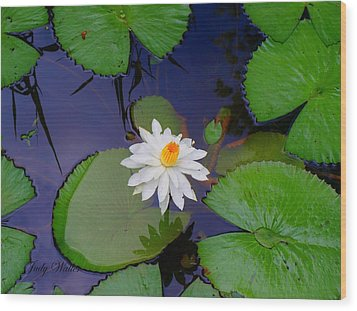 The Water Lily Wood Print by Judy  Waller