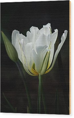 The White Tulip Wood Print