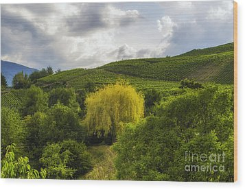 the wineyards of Loc Wood Print by Michelle Meenawong