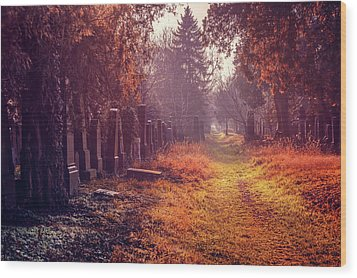 The Winter Path  Wood Print by Carol Japp