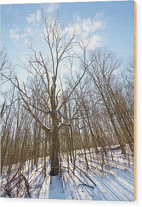 The Winter Woods Wood Print by Tim Fitzwater