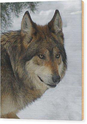 The Wolf 2 Wood Print by Ernie Echols