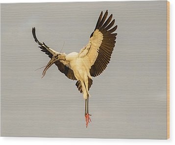 The Wood Stork Angel Wood Print by Phil Stone