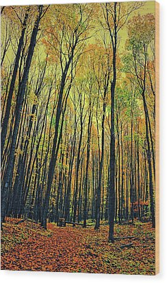 The Woods In The North Wood Print by Michelle Calkins