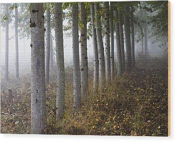 The Woods Wood Print by Rebecca Cozart