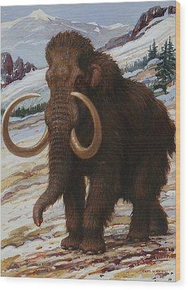 The Woolly Mammoth Is A Close Relative Wood Print by Charles R. Knight