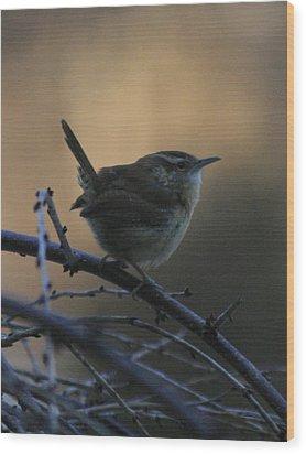 The Wren Wood Print