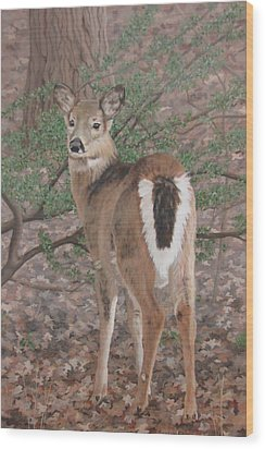 The Yearling Wood Print by Sandra Chase