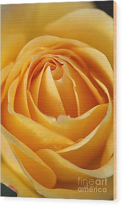 The Yellow Rose Wood Print by Joy Watson