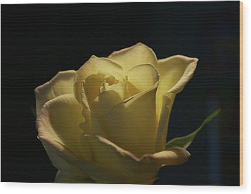 Wood Print featuring the photograph The Yellow Rose by Sheryl Thomas