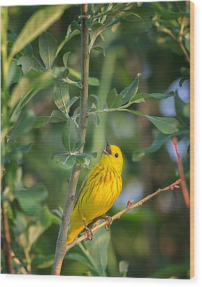 Wood Print featuring the photograph The Yellow Warbler by Bill Wakeley
