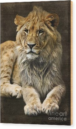 The Young Lion Wood Print by Angela Doelling AD DESIGN Photo and PhotoArt