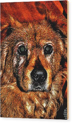 These Eyes Wood Print by William Jones