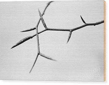 Thin Wood Print by Gabriela Insuratelu
