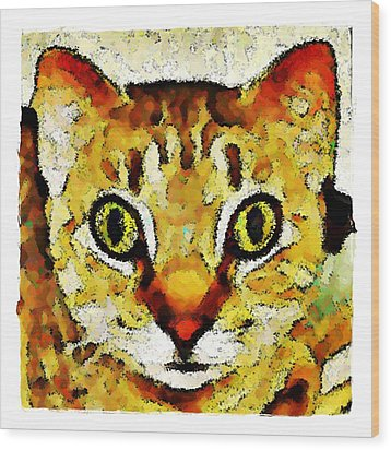 This Is My Surprised Face Kitty Wood Print by Terry Mulligan
