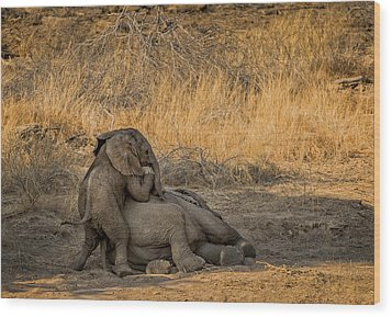 This Is Namibia No.  4 - Come On Bro I Wanna Play Wood Print by Paul W Sharpe Aka Wizard of Wonders